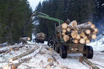 Директор Брустурянського лісгоспу розповів про вирубку дерев, нові лісові дороги, вовків та оленів