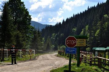 У лісах Закарпаття працюють відеопастки для браконьєрів