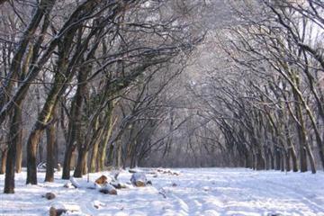 Суд скасував «земельне» рішення Ужгородської міськради
