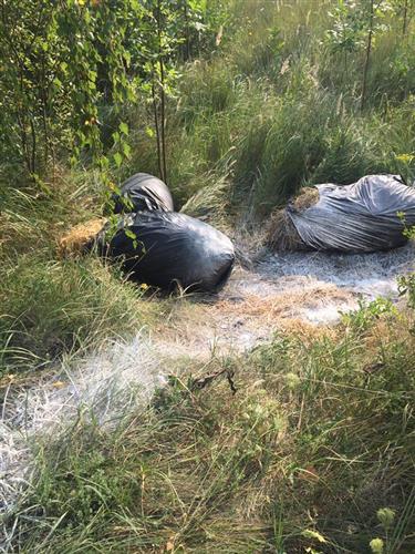 Вбитих свиней на Закарпатті залишають просто біля канав на трасі