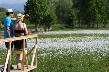 На Закарпатті зацвіте Долина нарцисів (ФОТО)