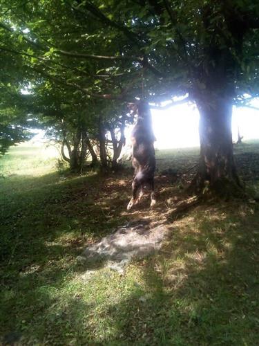 На Закарпатті нелюди повісили на дереві собаку (ФОТО 18+)