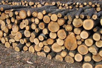Мешканцям Виноградівщини нагадують порядок виписки дров паливних